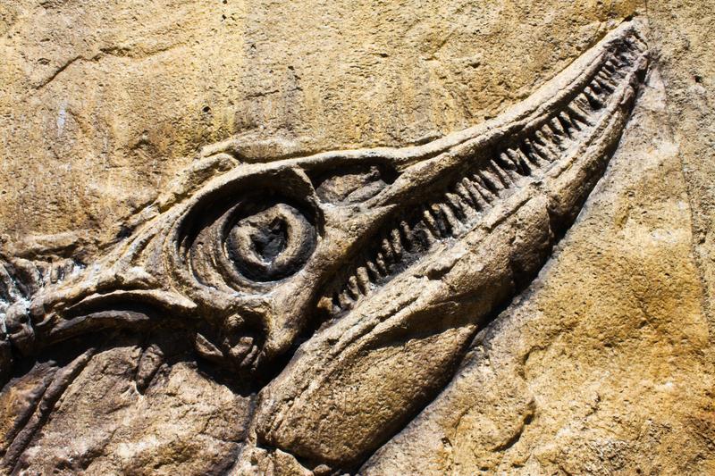 muinaiset kalat harrastivat ensimmäisenä seksiä