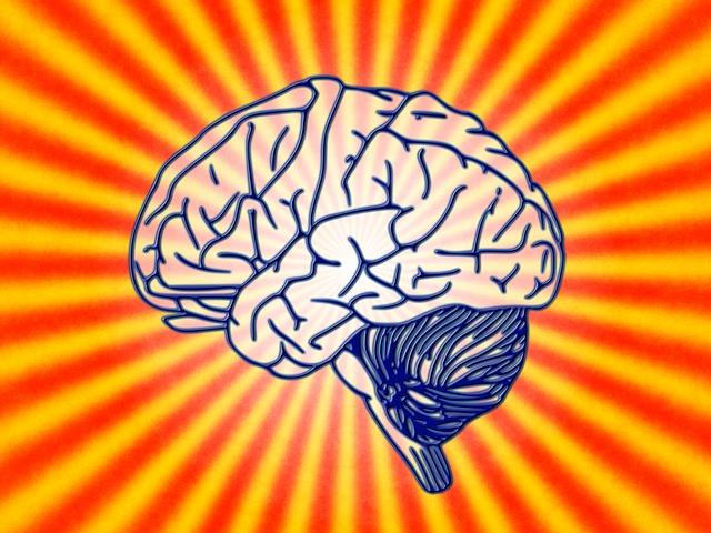 ihmisen aivot