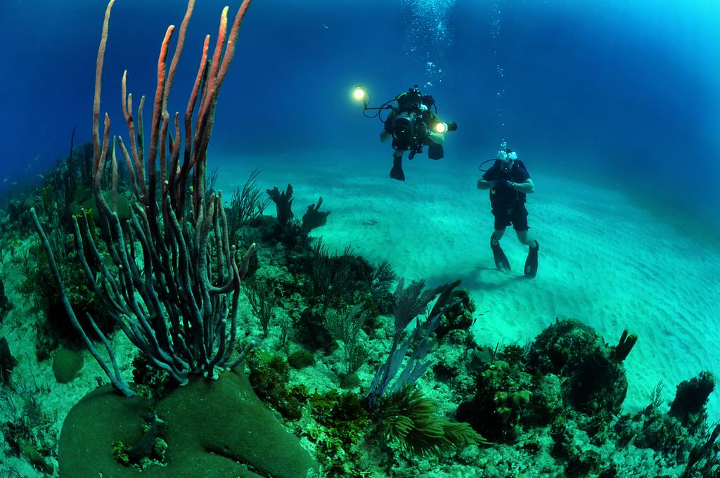 kaksi sukeltajaa koralliriutalla