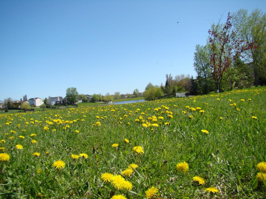 kesäinen niitty